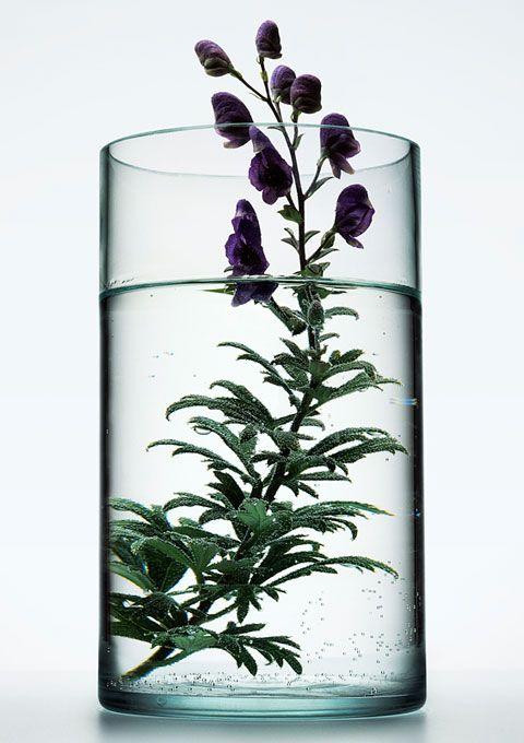 herbs in jar