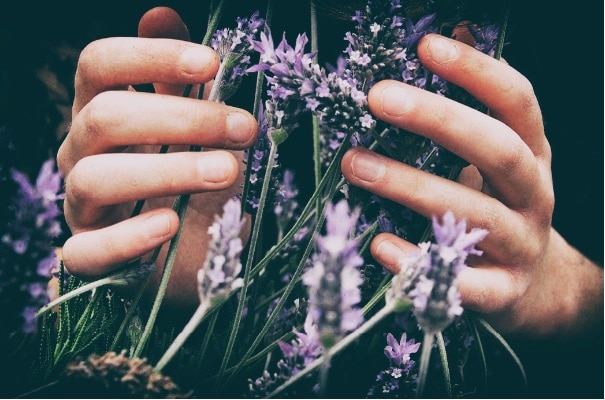 hands with lavender